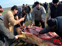 concurs taiat porci udmr satu mare (39)