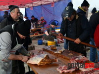 concurs taiat porci udmr satu mare (97)