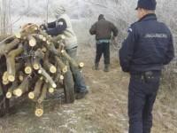 Se fură lemne ca-n Codru în județ