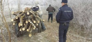 furt-lemne-jandarmi
