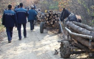 hoti de lemne satmarel