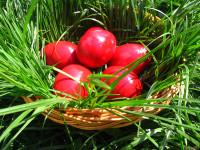 Mesaj de Paște din partea ALDE Satu Mare