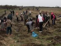 Peste două mii de puieți, plantați azi în județ. Au pus umărul și autoritățile județene (FOTO)