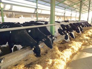 producatori lapte