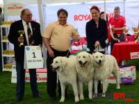 international dog show satu mare (100)