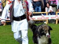 international dog show satu mare (105)