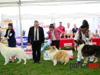 international dog show satu mare (113)