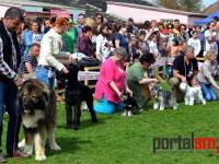 international dog show satu mare (127)