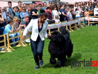 international dog show satu mare (131)