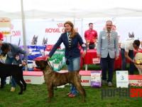 international dog show satu mare (142)