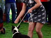 international dog show satu mare (147)
