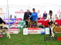 international dog show satu mare (155)
