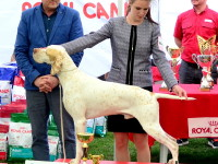 international dog show satu mare (159)