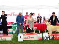 international dog show satu mare (172)