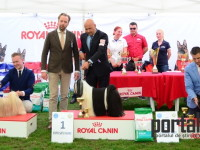 international dog show satu mare (177)