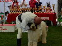 international dog show satu mare (18)
