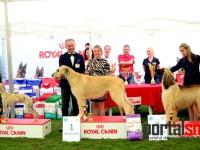 international dog show satu mare (184)