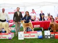 international dog show satu mare (185)