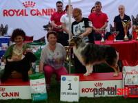 international dog show satu mare (193)
