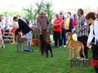 international dog show satu mare (198)