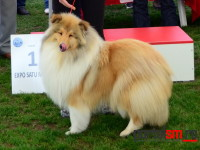 international dog show satu mare (202)
