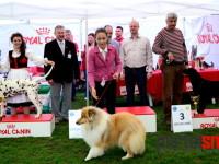 international dog show satu mare (203)