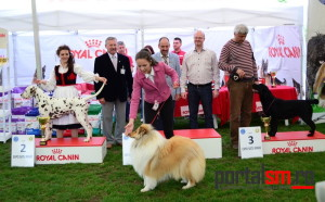 international dog show satu mare (204)