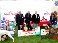 international dog show satu mare (216)