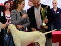 international dog show satu mare (226)