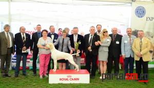 international dog show satu mare (230)