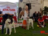 international dog show satu mare (33)