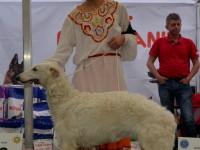 international dog show satu mare (41)