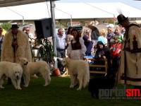 international dog show satu mare (46)
