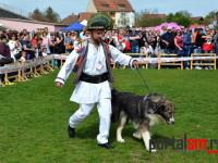 international dog show satu mare (52)