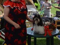 international dog show satu mare (6)