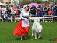 international dog show satu mare (61)