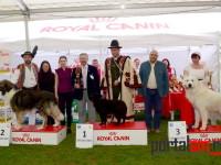 international dog show satu mare (66)