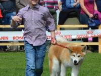international dog show satu mare (76)