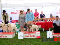 international dog show satu mare (93)