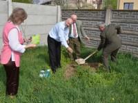 plantare gradinita 14 mai7