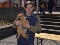 targ adoptii satu mare10