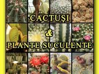 Expoziție de cactuşi şi plante suculente la Muzeul Județean