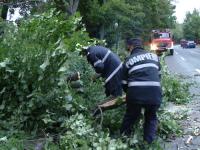Copaci căzuţi pe carosabil, garduri şi maşini, în urma furtunilor. Pompierii au avut mult de muncă