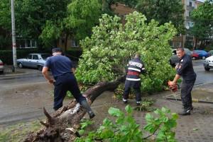 vijelie copaci cazuti