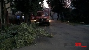 copac cazut satu mare (8)