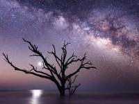 Horoscopul celtic al copacilor: Descoperă-ți înțelepciunea sacră!