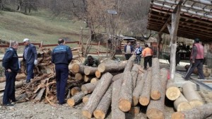 hoti de lemne2