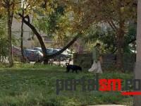 Pericol public. O femeie cu trei câini terorizează locuitorii din Micro 17 (FOTO)