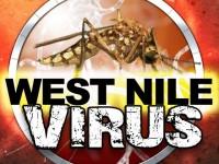 Virusul West Nile, confirmat la Satu Mare. Ce spun cei de la DSP