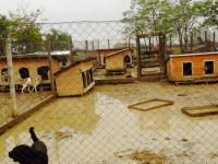 Dezastru la adăpost. Țarcurile inundate, câinii pe cuşti! (FOTO)